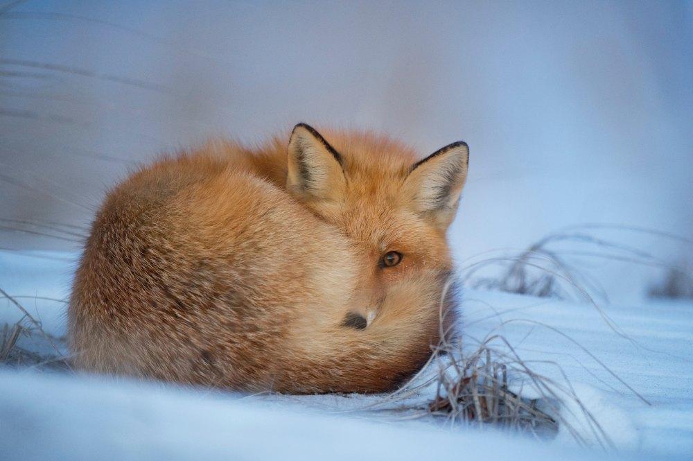Winter 4 Fox Angella Bloody