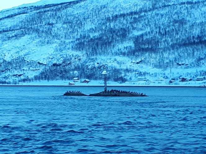 Angella Bloody Tromso 11 Norvege